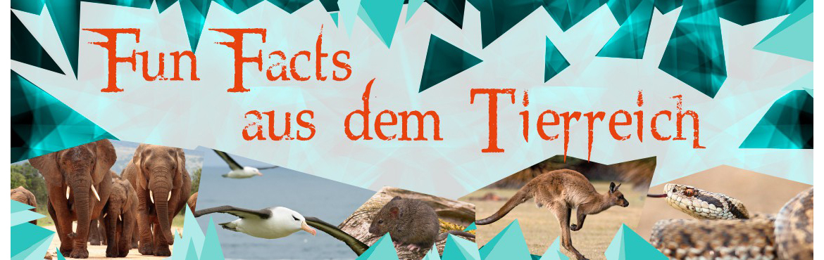 Animox. Tierische facts